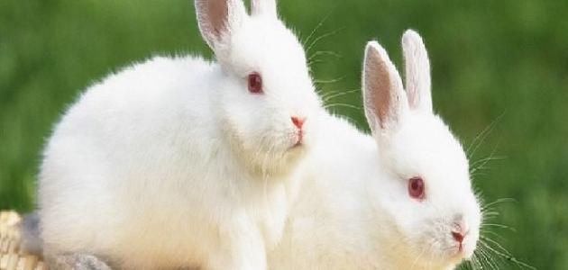 بالصور صور حيوانات , اجمل صور للحيوانات الاليفه بين يديك 4615 7