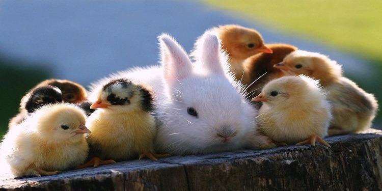 صور صور حيوانات , اجمل صور للحيوانات الاليفه بين يديك