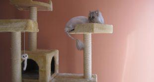 صور خلفيات قطط , صور جميله للقطط