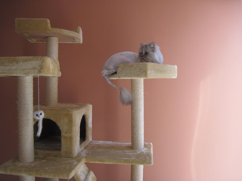 صورة خلفيات قطط , صور جميله للقطط