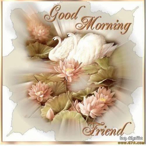 بالصور صور صباحيه للحبيب , افضل صور صباح الخير 4966 13