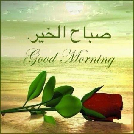 بالصور صور صباحيه للحبيب , افضل صور صباح الخير 4966 2