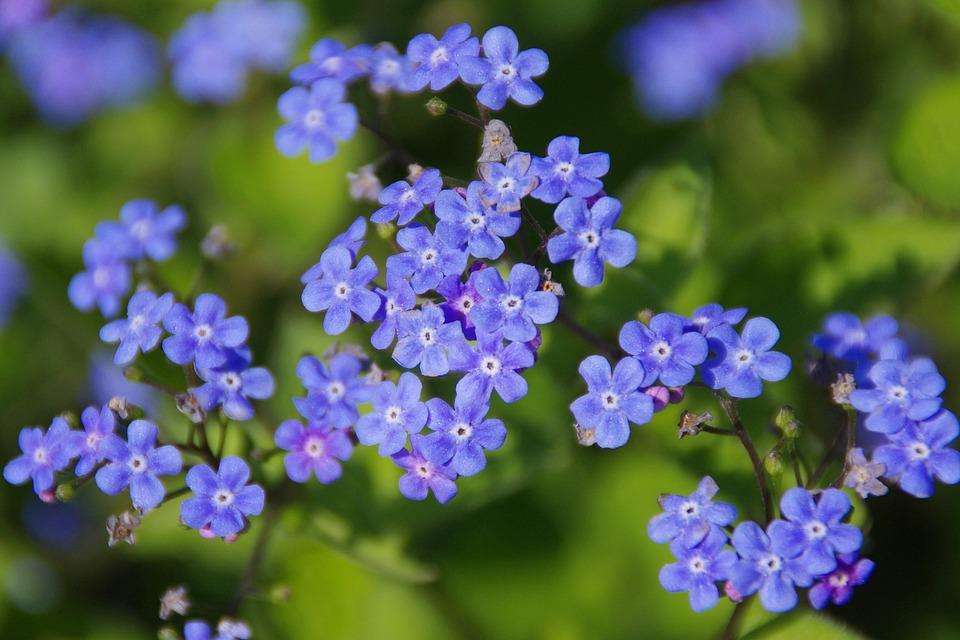 بالصور صور ورد صور ورد , خلفيات زهور و ورد 5052 10