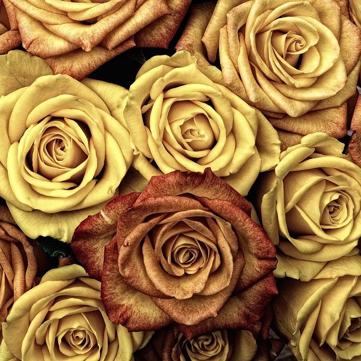 بالصور صور ورد صور ورد , خلفيات زهور و ورد 5052 2