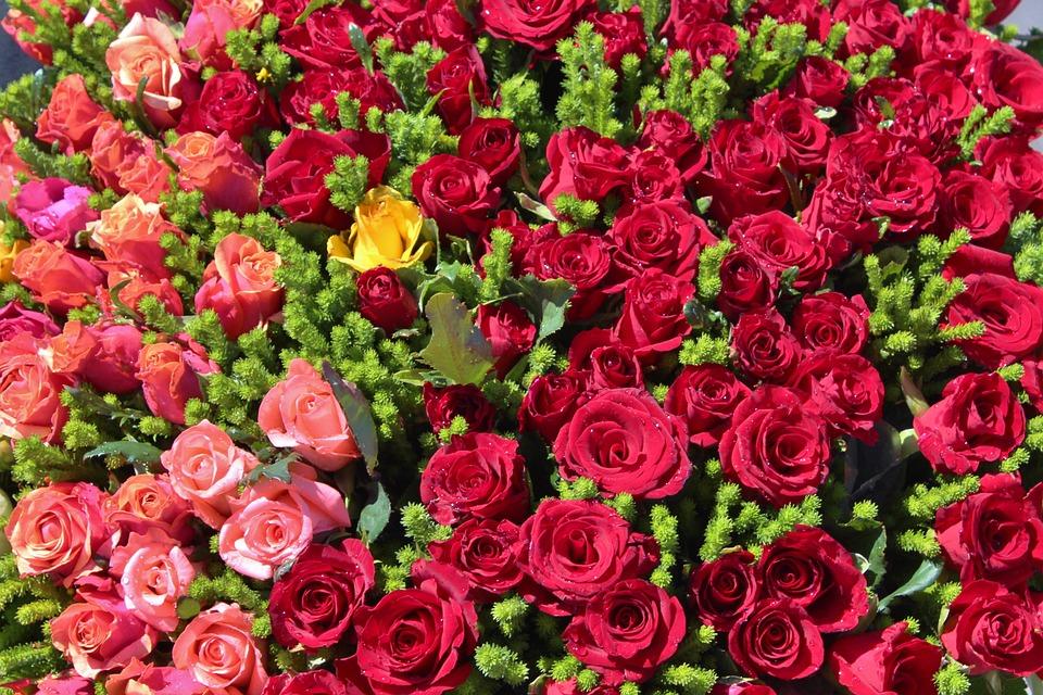 بالصور صور ورد صور ورد , خلفيات زهور و ورد 5052 4