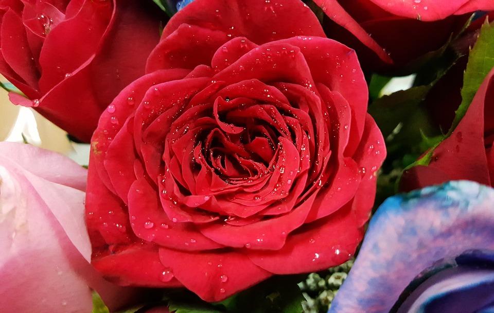 بالصور صور ورد صور ورد , خلفيات زهور و ورد 5052 7