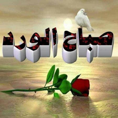بالصور صباح نور , صور صباح الفل 5082 16