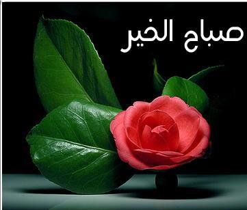 بالصور كلمات جميلة عن الصباح , صور صباح الخير 5091 10