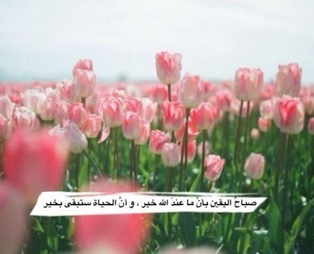 بالصور صور صباح الورد , خلفيات صباحية رائعه 5116 9