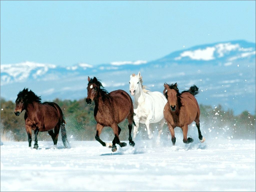 صوره اجمل صور خيول , احلي صور الخيول