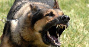 بالصور اشرس انواع الكلاب ٖالكلاب الشرسة وانواعها 6225 3 310x165