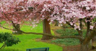 بالصور صور فصل الربيع , اروع الصور لفصل الربيع 676 12 310x165