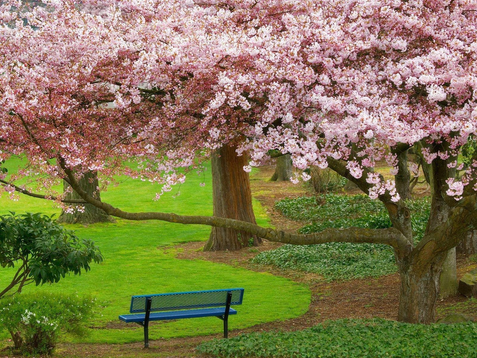 صوره صور فصل الربيع , اروع الصور لفصل الربيع