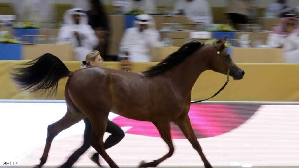 بالصور خيول عربية , اروع الخيول العربية 1099 3