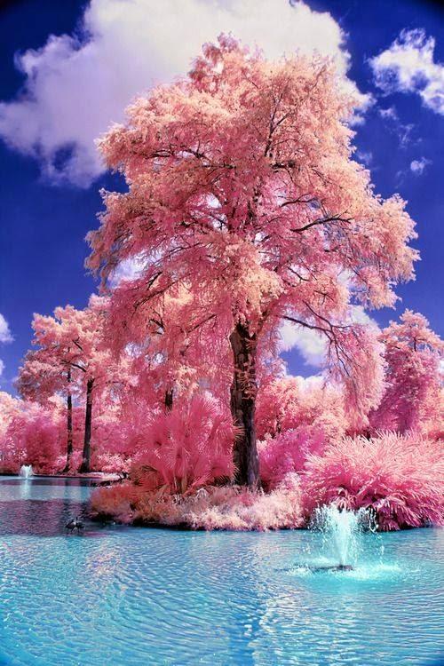صور طبيعة خلابة خلفيات لمناظر طبيعية جذابة مساء الورد