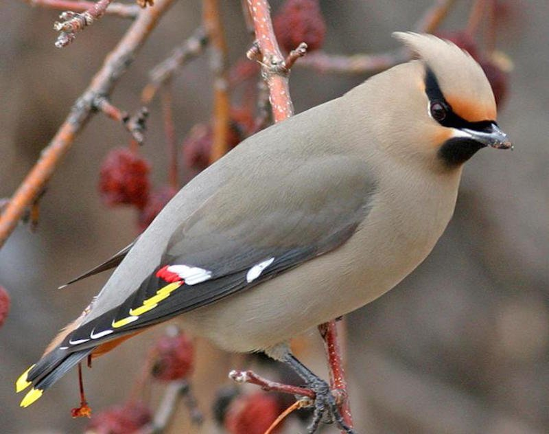 بالصور اجمل طيور العالم , اروع طيور ستراه في حياتك 775 1