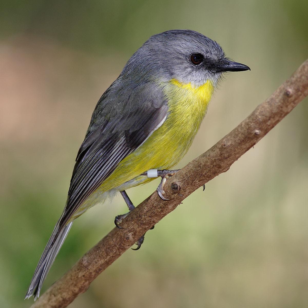 بالصور اجمل طيور العالم , اروع طيور ستراه في حياتك 775 12
