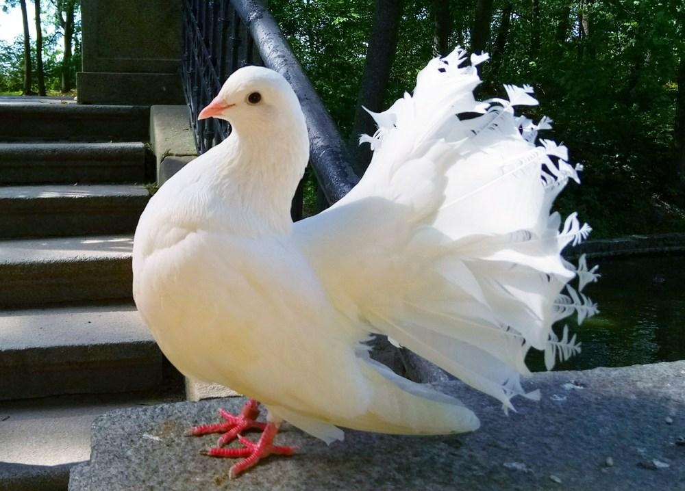 بالصور اجمل طيور العالم , اروع طيور ستراه في حياتك 775 14