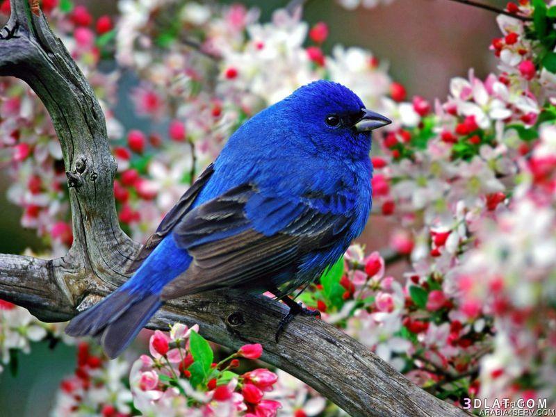 بالصور اجمل طيور العالم , اروع طيور ستراه في حياتك 775 15