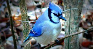 صوره اجمل طيور العالم , اروع طيور ستراه في حياتك