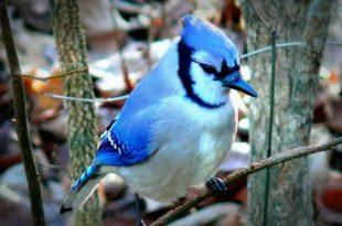 بالصور اجمل طيور العالم , اروع طيور ستراه في حياتك 775 16 310x205