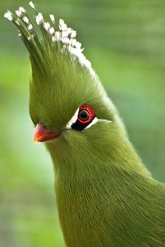 بالصور اجمل طيور العالم , اروع طيور ستراه في حياتك 775 2