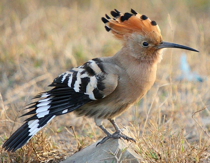 بالصور اجمل طيور العالم , اروع طيور ستراه في حياتك 775 4
