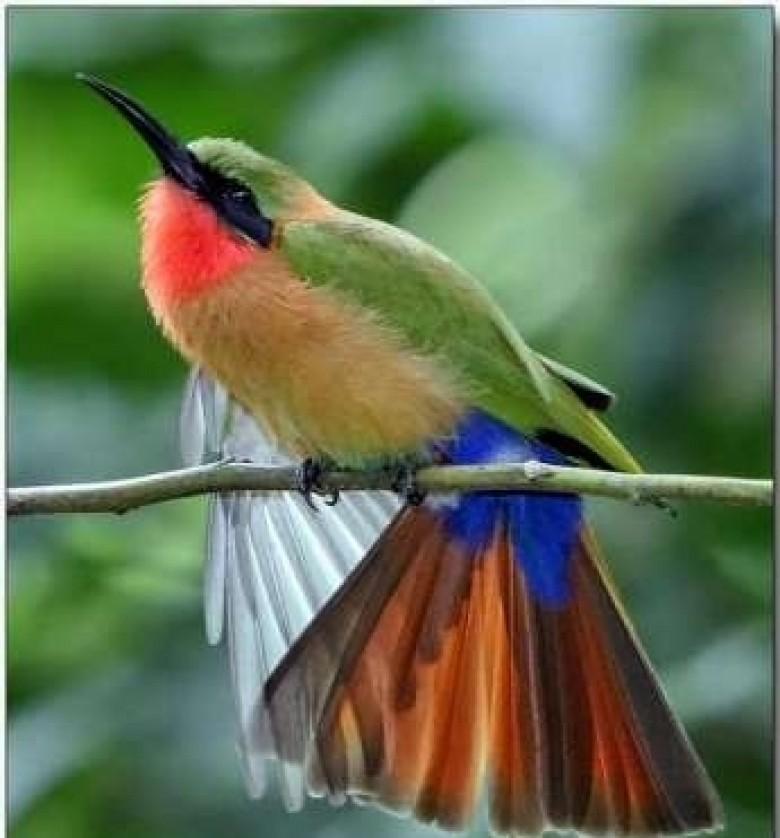 بالصور اجمل طيور العالم , اروع طيور ستراه في حياتك 775 6