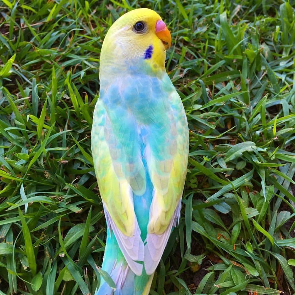 بالصور اجمل طيور العالم , اروع طيور ستراه في حياتك 775 7