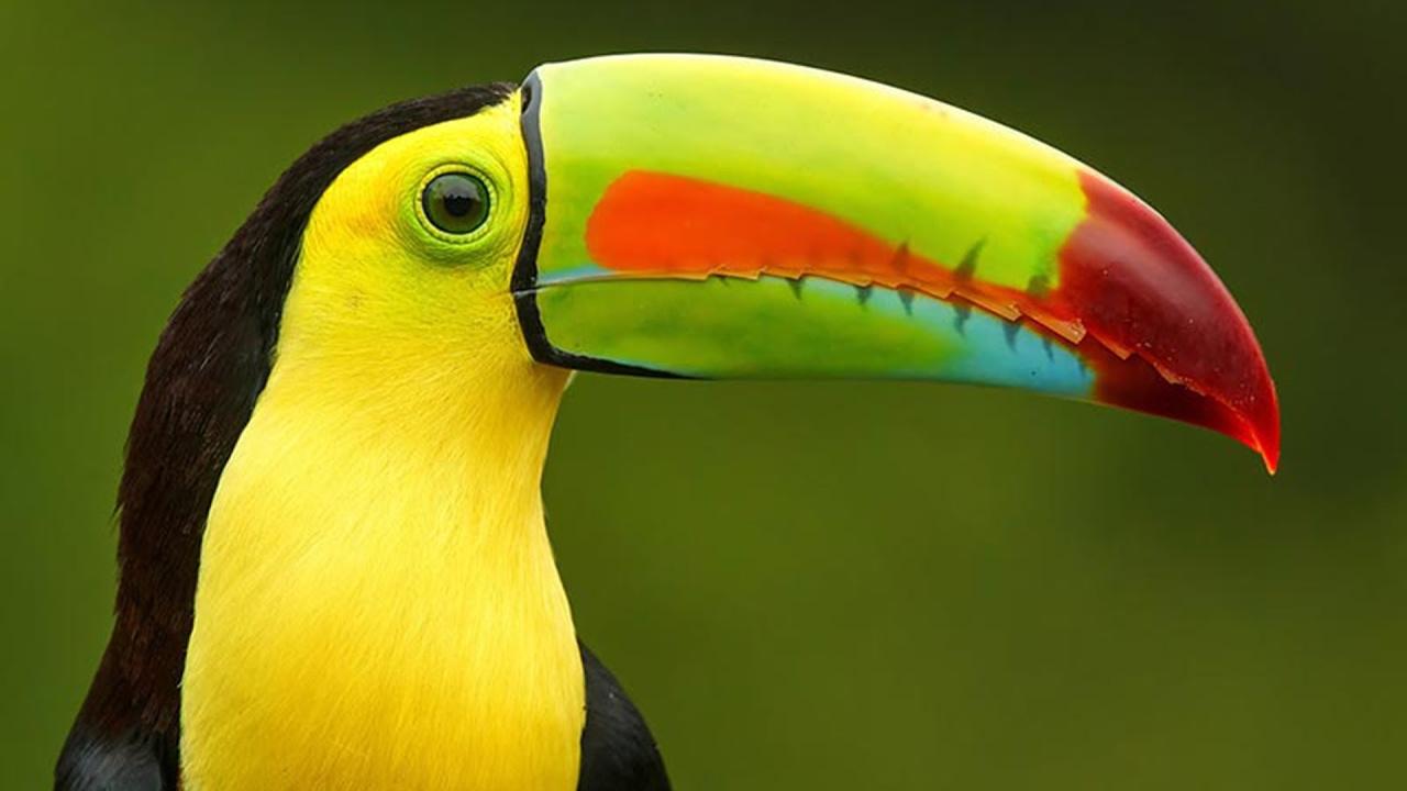 بالصور اجمل طيور العالم , اروع طيور ستراه في حياتك 775 8