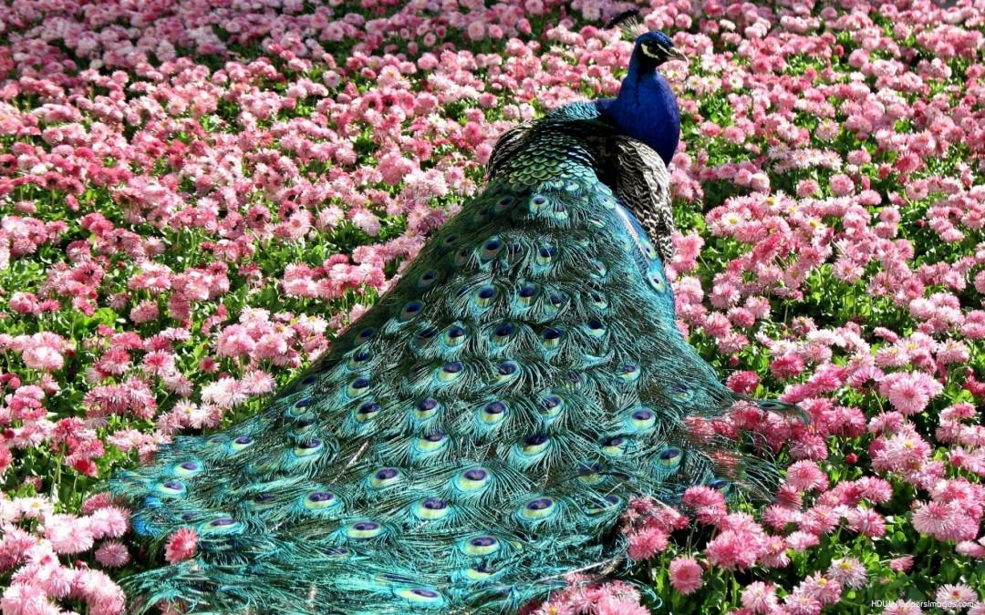 بالصور اجمل طيور العالم , اروع طيور ستراه في حياتك 775 9