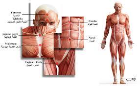 بالصور صور جسم الانسان , اروع صور لجسم الانسان 791 11
