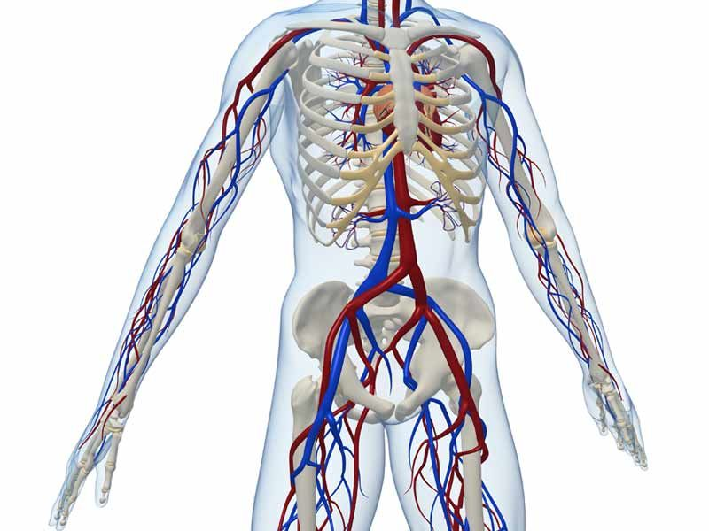 بالصور صور جسم الانسان , اروع صور لجسم الانسان 791 7