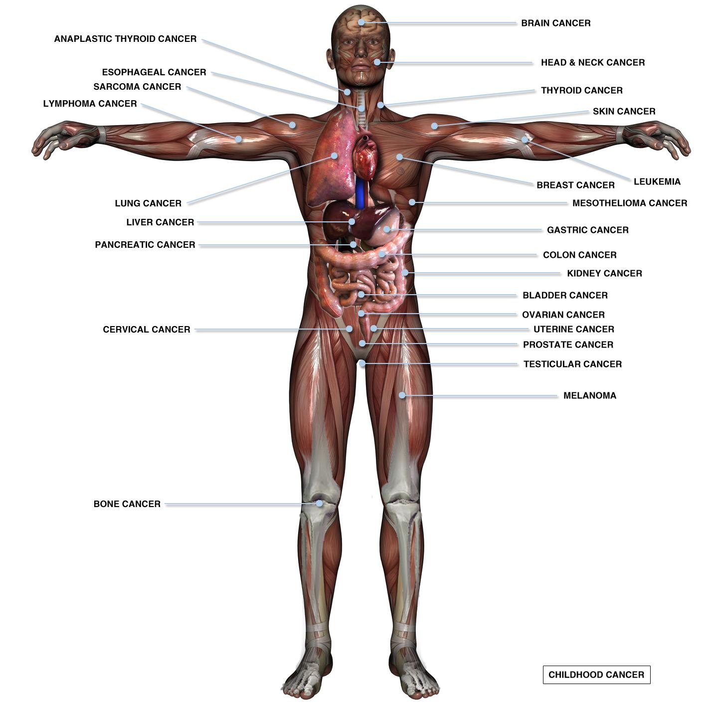 man body parts - HD1414×1414