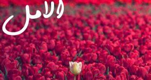 صوره شعر صباح الخير حبيبي , اروع اشعار صباح الخير للحبيب