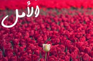 بالصور شعر صباح الخير حبيبي , اروع اشعار صباح الخير للحبيب 937 15 310x205