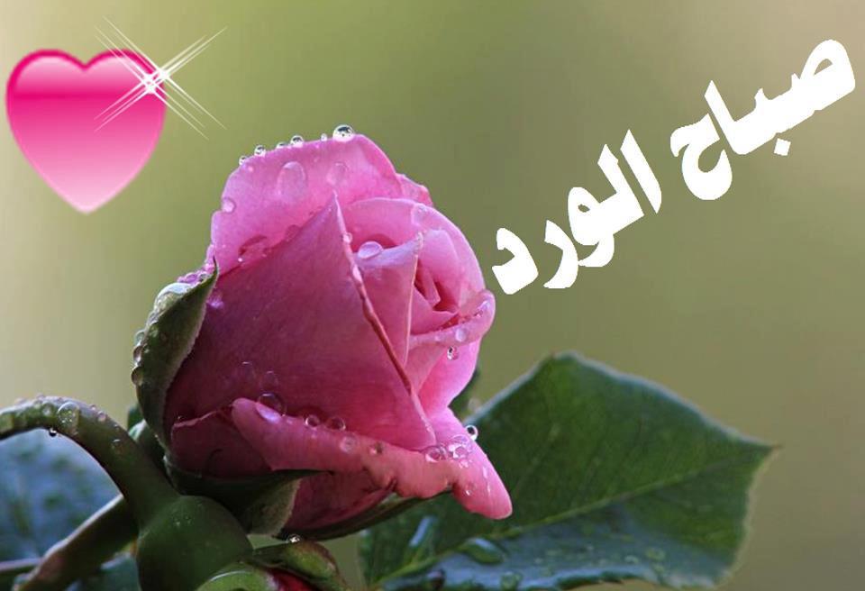 صورة شعر صباح الخير حبيبي , اروع اشعار صباح الخير للحبيب 937 8
