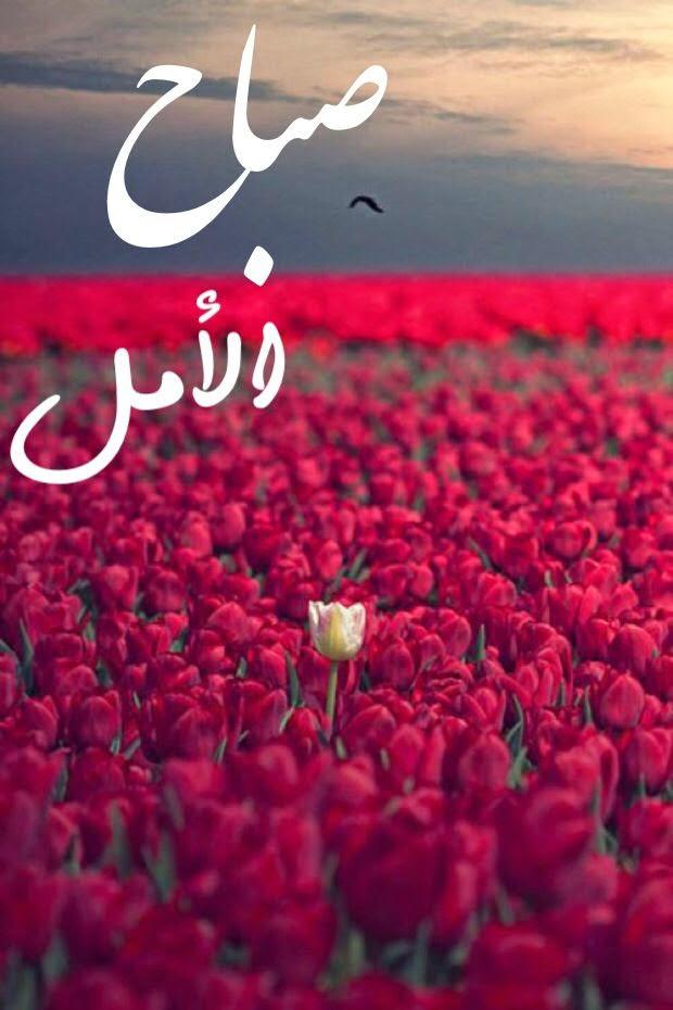 صورة شعر صباح الخير حبيبي , اروع اشعار صباح الخير للحبيب 937