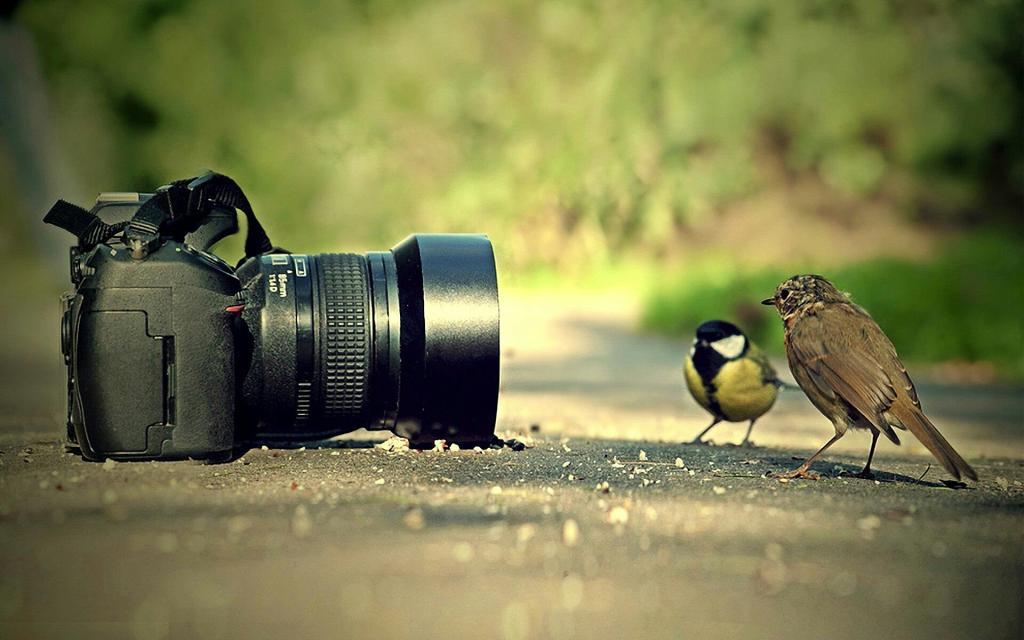 بالصور تصوير احترافي , كيف تصبح مصور احترافي 1052 2