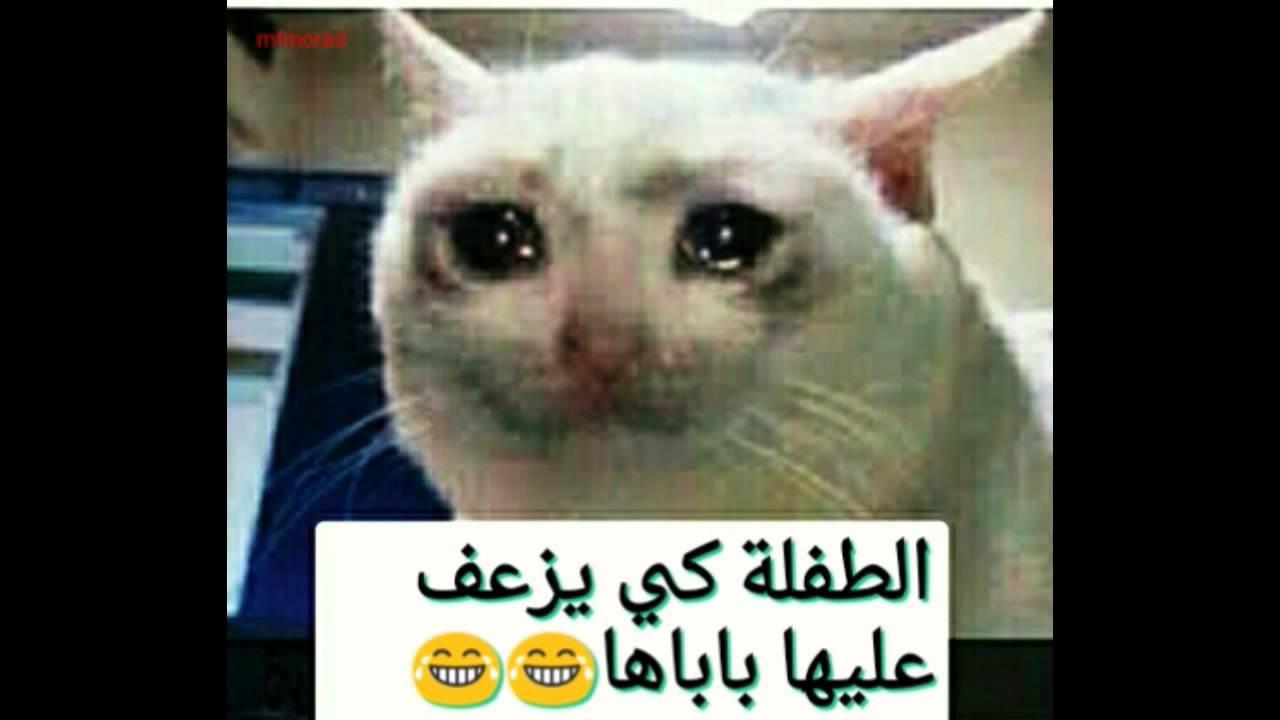 بالصور صور جزائرية مضحكة , اضحك مع اجمل نكت جزائرية 977 6