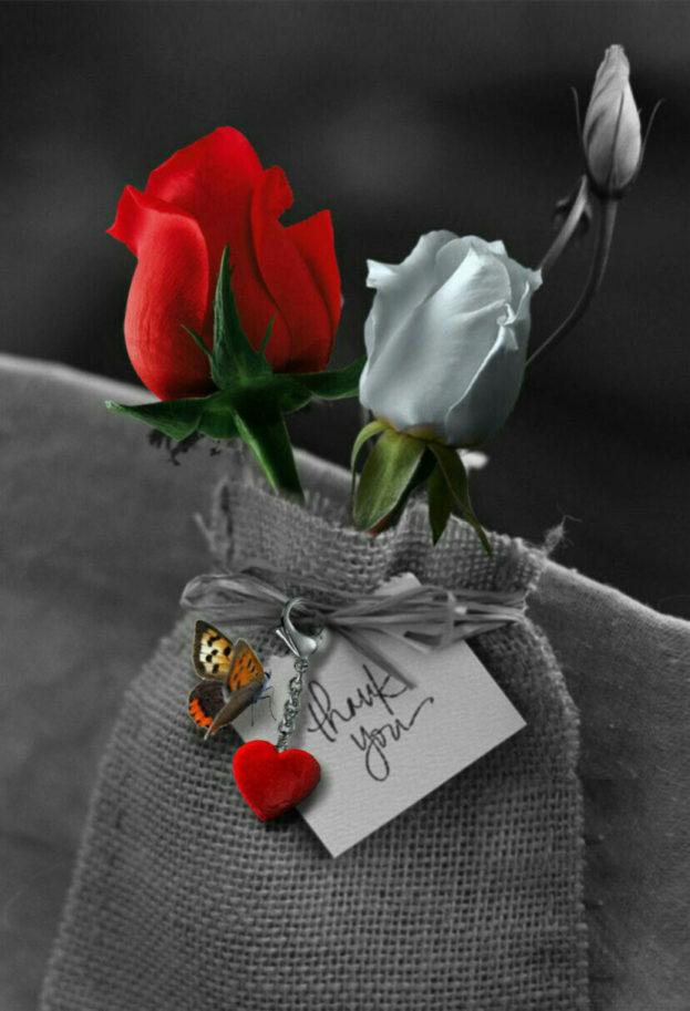 بالصور اجمل ورود الحب , اجمل باقات زهور الحب 978 3