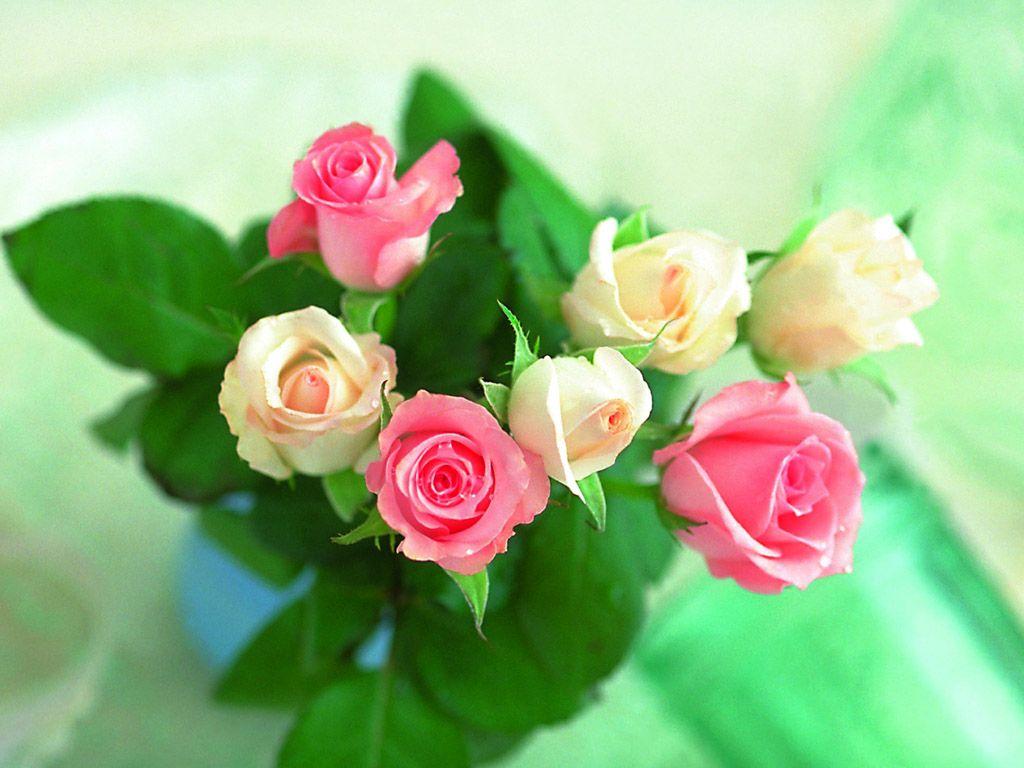 بالصور اجمل ورود الحب , اجمل باقات زهور الحب 978 4