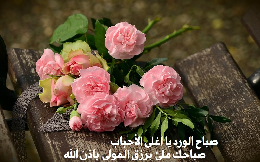 بالصور صباح الورد والفل , الصباح وكل ما هو جميل من الورد والفل 5731 1