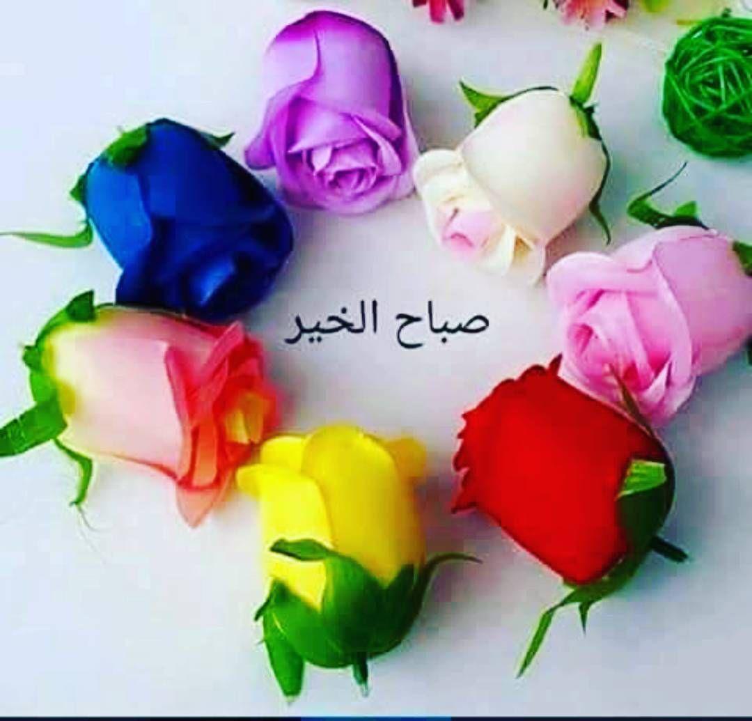 بالصور صباح الورد والفل , الصباح وكل ما هو جميل من الورد والفل 5731 3