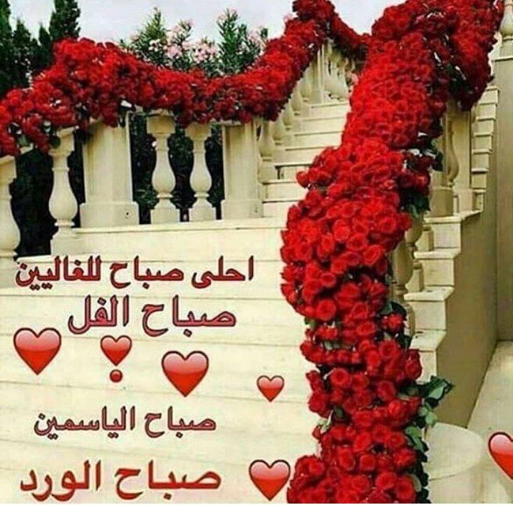 بالصور صباح الورد والفل , الصباح وكل ما هو جميل من الورد والفل 5731 5