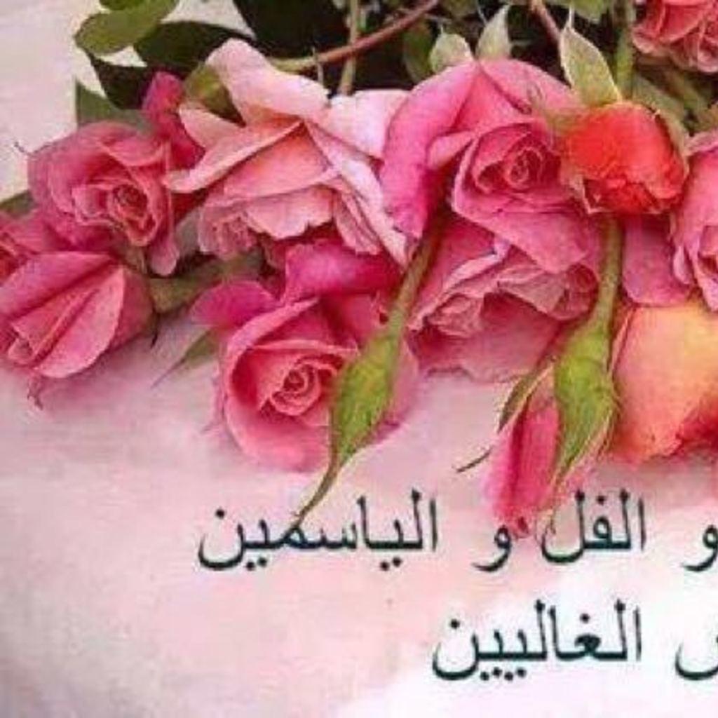 بالصور صباح الورد والفل , الصباح وكل ما هو جميل من الورد والفل 5731 7