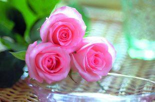 بالصور ازهار جميلة , اجمل ورود وازدهار في العالم 1612 13 310x205