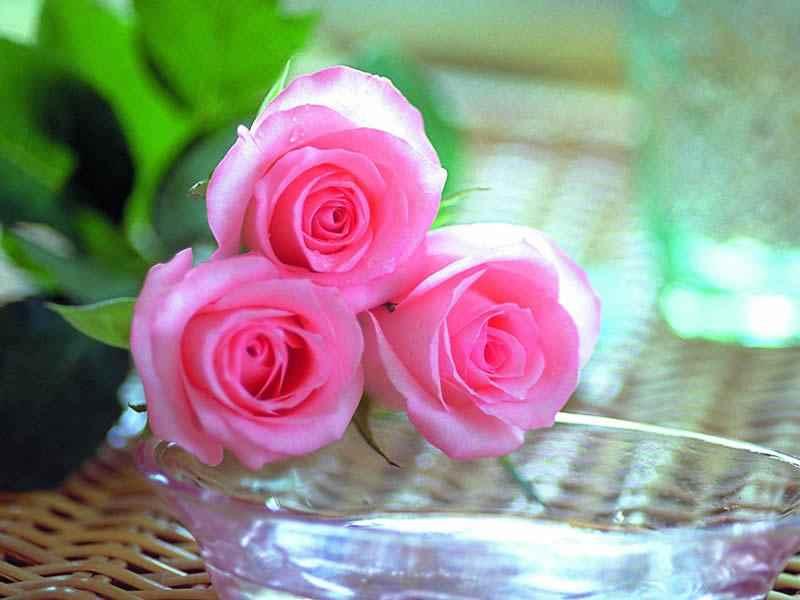 بالصور تنزيل صور ورد , الورد وجماله وابرازه فى صورة جميله 1657 12