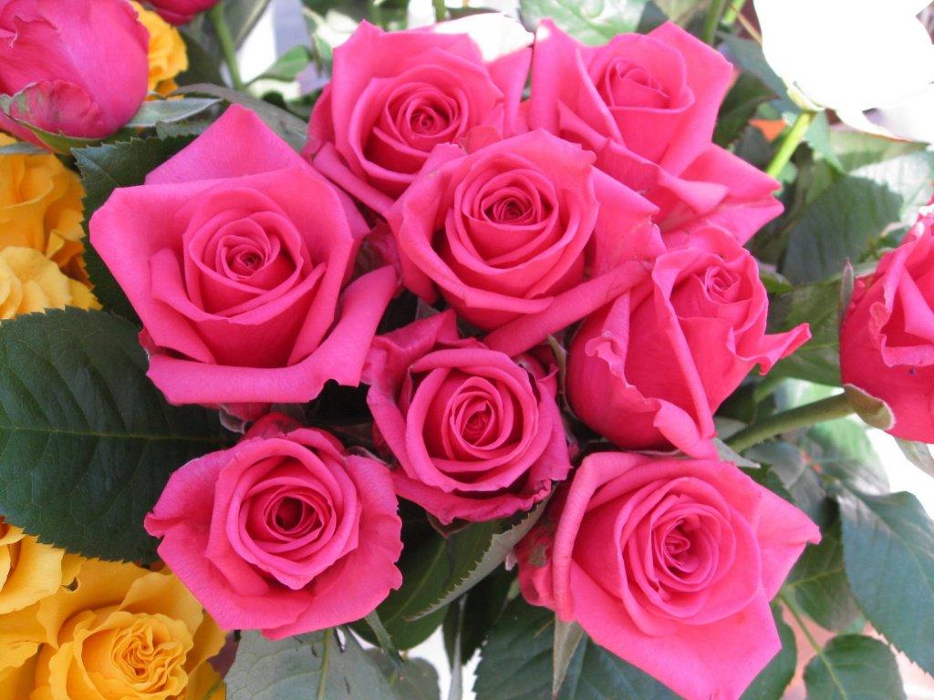 بالصور تنزيل صور ورد , الورد وجماله وابرازه فى صورة جميله