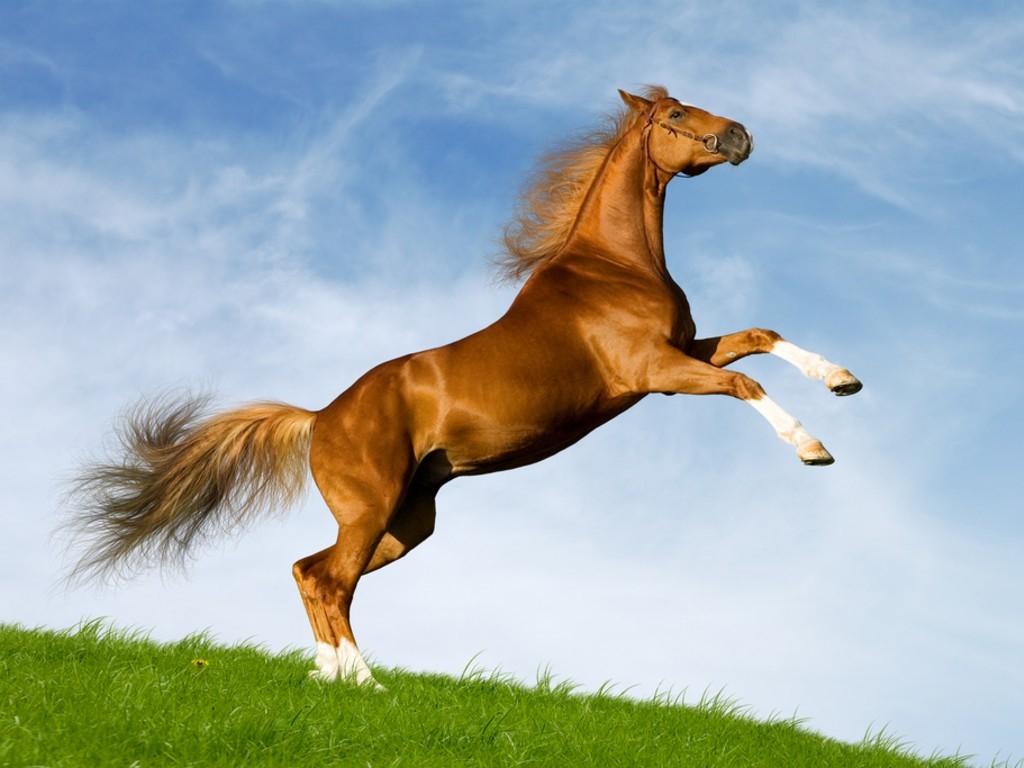بالصور صور حصان , اجمل حصان في العالم 1700 10